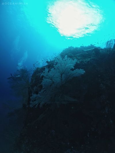 Protecting Where We Play UnderSea Check This Out Scuba Diving Volcano India Coral Reef The Great Outdoors - 2016 EyeEm Awards Goprooftheday Oceanlifestyle Oceaninspiration Freshness SCUBA Scuba Diving UnderSea Outdoors