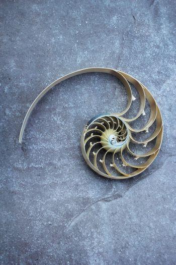 High angle view of shell on metal