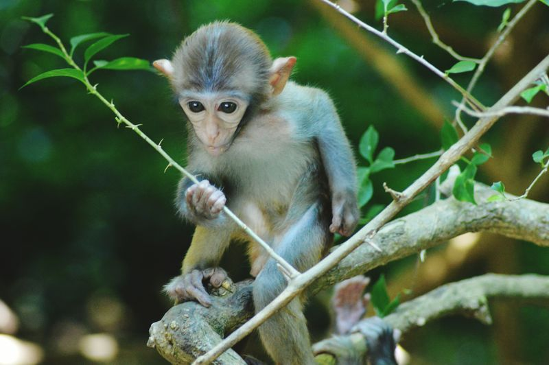 Monkey Lemur Portrait Tree Looking At Camera Ape Closing Social Issues Eye Close-up Monkey Baboon Tropical Rainforest Infant Animal Eye