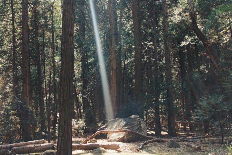 Yosemite Nationalpark, CA