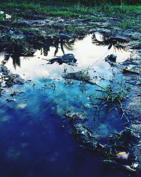 Sunset reflecting from puddle Light Puddle Sunset Blue Water Nature Reflection Tree Plant Lake No People Outdoors Beauty In Nature Tranquility High Angle View Floating Sky Floating On Water Standing Water Growth Day Branch Wet Clean