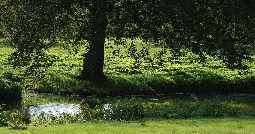 Jardin Jardinsdeau Puisaye Coeurdepuisaye Grainedenature Parc Arbres Yonne Yonnetourisme Igersbourgogne Igersyonne Automne🍁🍂🍃 Herbe Feuilles D'automne Feuilles Automne Autumn Village Commune Bleneau Jardins Vert