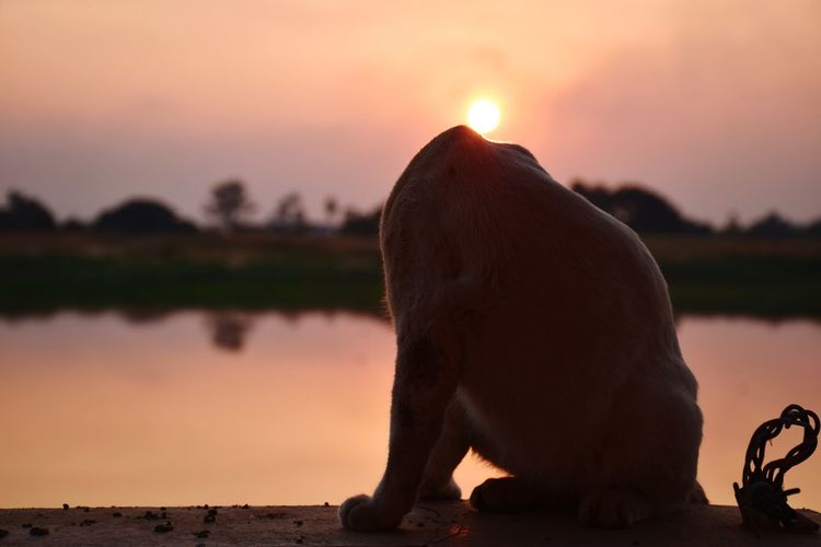 View of elephant on lake during sunset