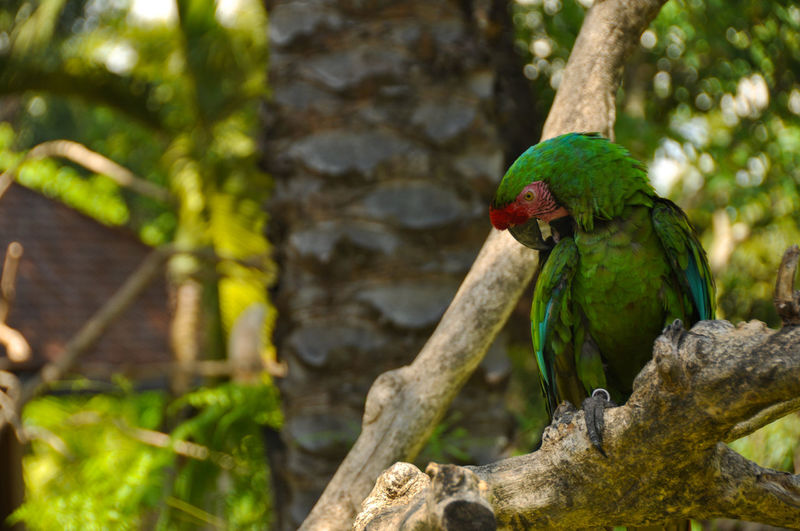 50+ Macaw Pictures HD | Download Authentic Images on EyeEm
