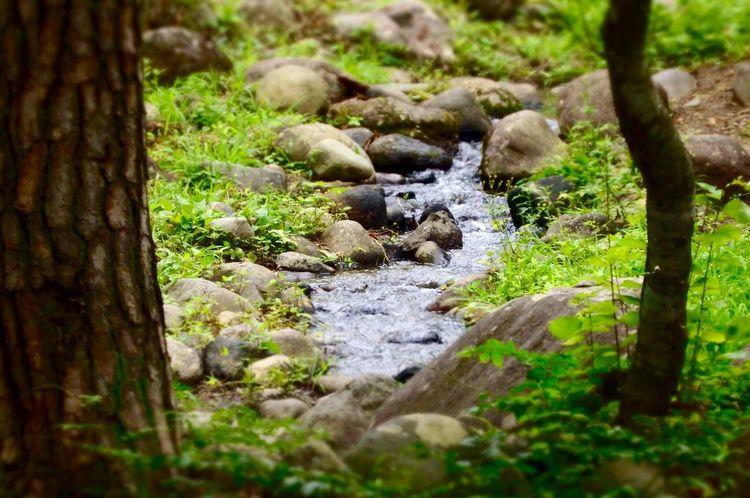 杏とさんぽ あづま総合運動公園 小川 Park Creek