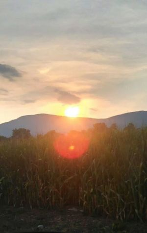 Beautiful summer sunset♡ Sunset Country Life