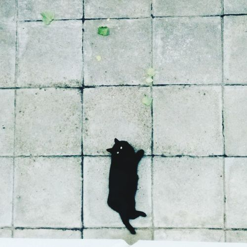 Black Cat Lucky One  Squares