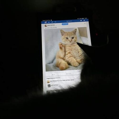 Cat Watching Loves His Kindle Funny Cat Check This Out Love My Cat Maine
