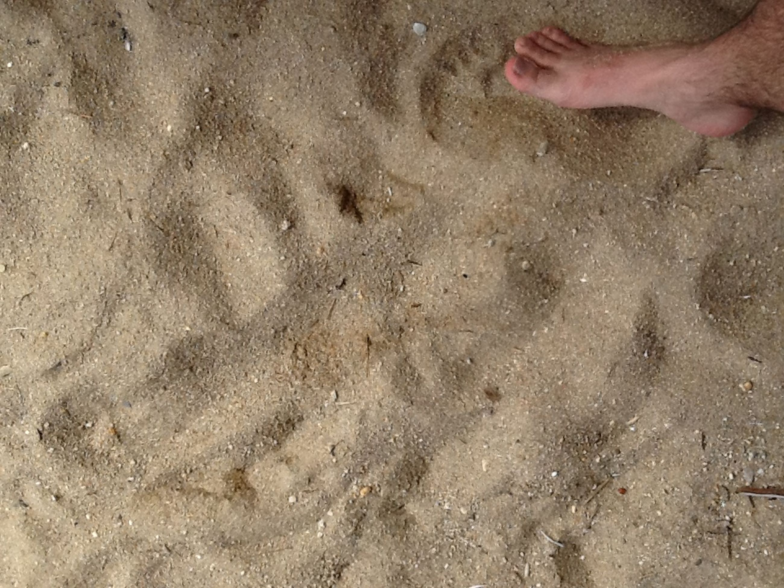 beach, sand, high angle view, water, low section, shore, person, lifestyles, leisure activity, unrecognizable person, wet, barefoot, part of, footprint, day, outdoors, sunlight
