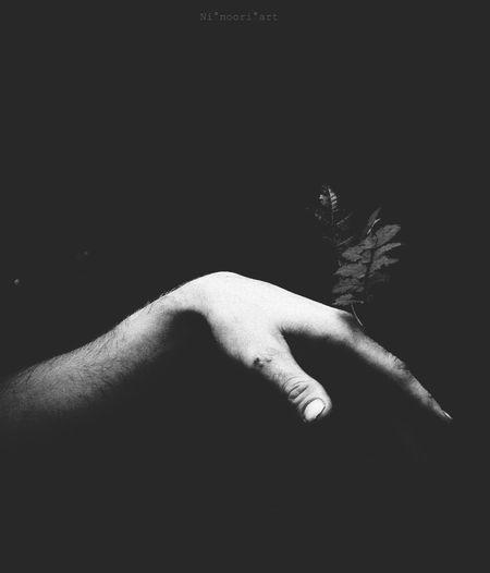 Hand Blackandwhite Contrast Woodlove