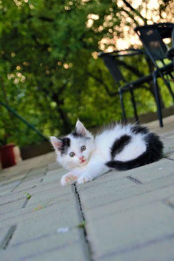 Atum Instagramcats Big Cat Mini Crazy Moments