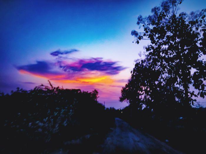 Tree Multi Colored Sunset Silhouette Sky Landscape Cloud - Sky Dramatic Sky