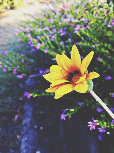 Vscocam Dew Drops Water Green Flowers Nature EyeEm Nature Lover Nature_collection Yellow