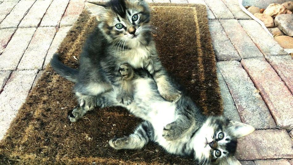 Kittys  Relaxing Taking Photos Shopkittys Flipsiderestoreation