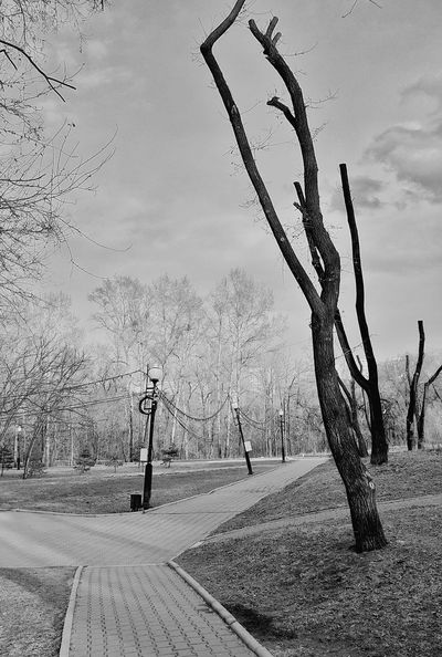 Nature Landscape No People