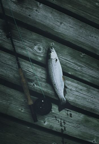 High angle view of trout and fishing rod on bench