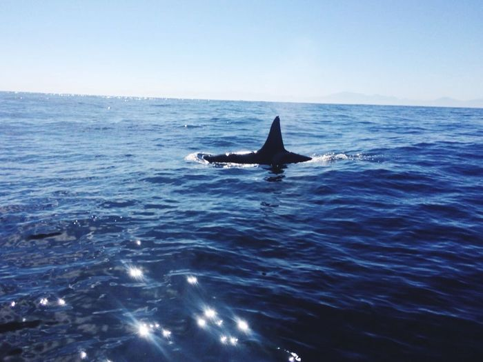 Killer wale circled our boat today Fishing Killer Whales Simonstown Up Costal Way