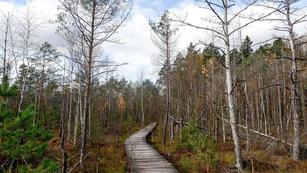 Tree Plant The Way Forward Forest Direction Footpath Nature Tranquility Non-urban Scene Sky Beauty In Nature Land No People Wood - Material Growth Day WoodLand Outdoors Dubravos Takas Dubrava Lithuania Peļķe Rezervatas
