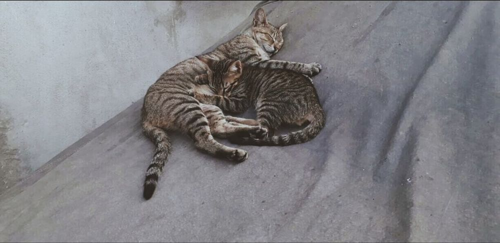 Indoors  No People Day Animal Themes Close-up Mammal Sleeping Cat Love Mom And Baby Cats Of EyeEm Cats 🐱 Beautiful Nature Everywhere Art Lazy Cat Nature Nature_collection