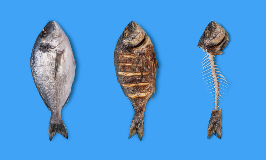Close-up of fish against blue background
