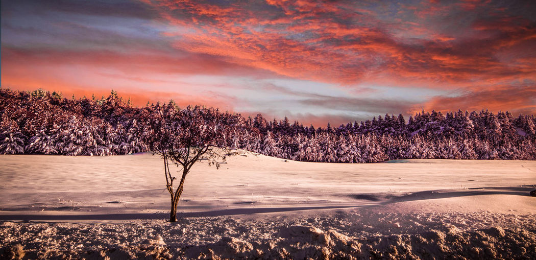Bare Tree Beauty In Nature Cloud - Sky Cold Temperature Day Landscape Nature No People Outdoors Scenics Sky Snow Sunset Tranquil Scene Tranquility Tree Winter