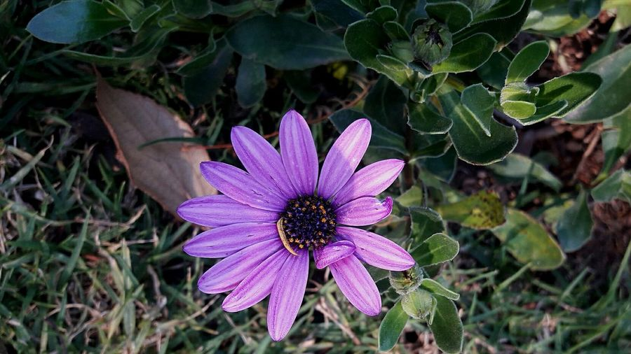 High angle view of purple flower blooming outdoors