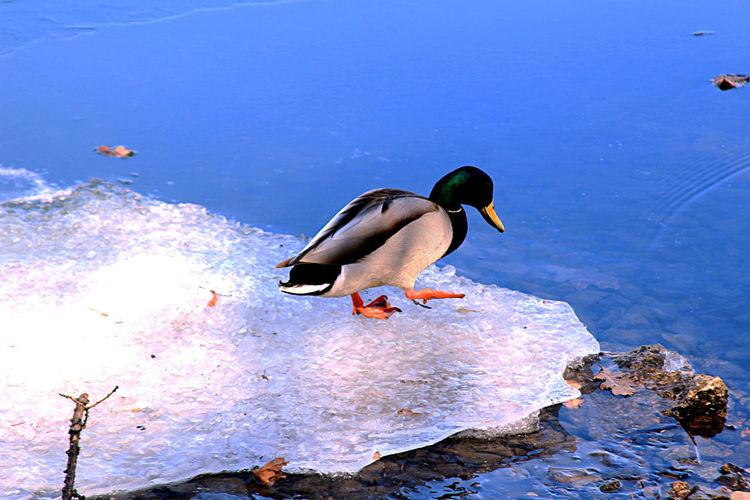 Bird Water Bird