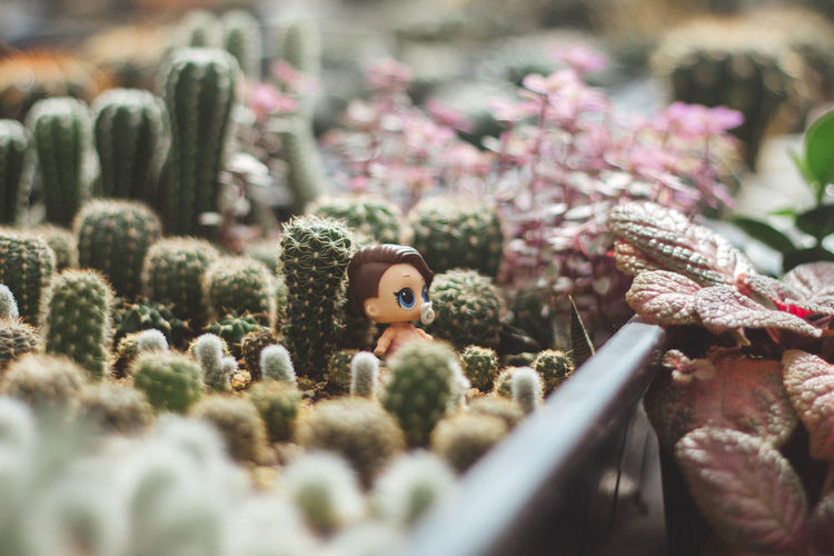 Close-up of toys on plants