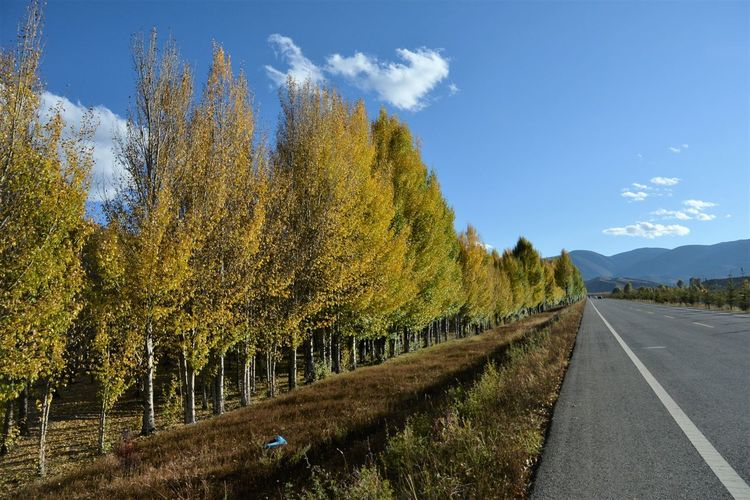 Panoramic view of road by trees against sky