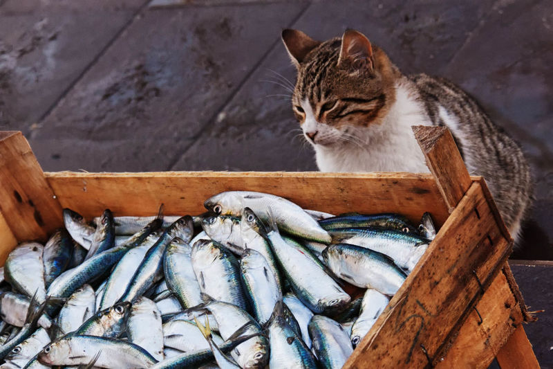 Cat looking at stack of fish