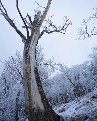 Hello World Enjoying Life Snow Tree Treeart Trees Object Wildlife