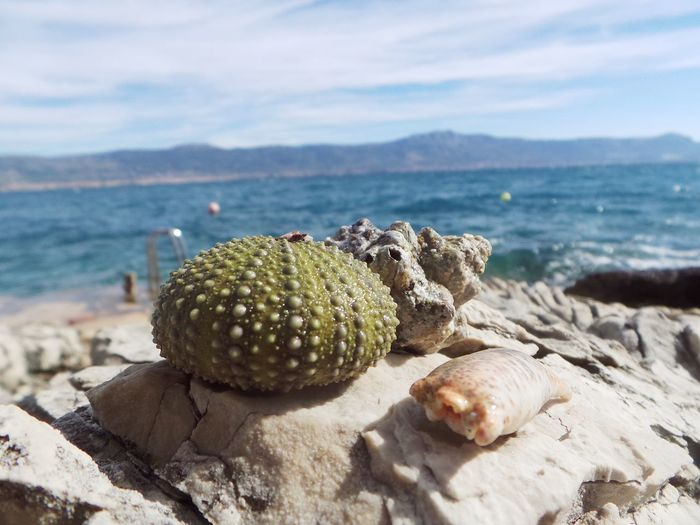 Close-up of sea urchin with shells on rock at shore against sky