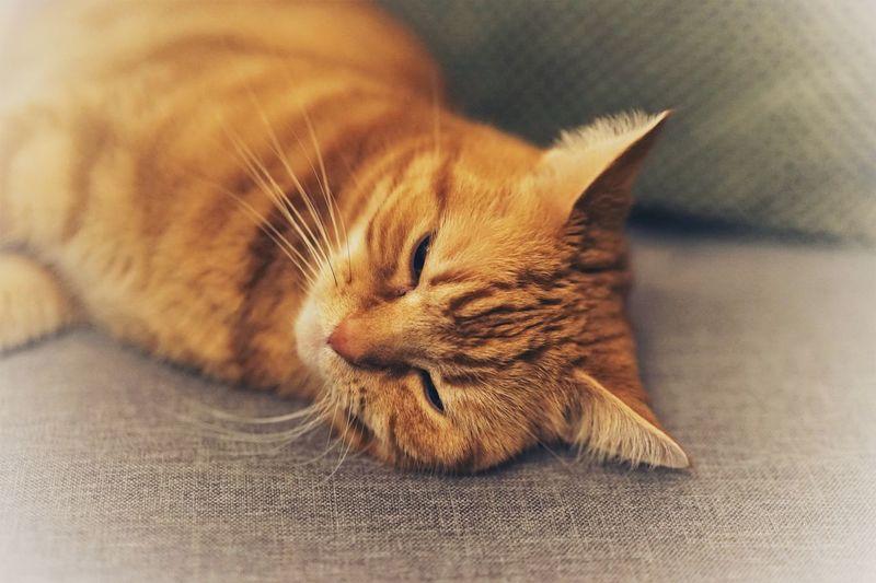Sleepy catty