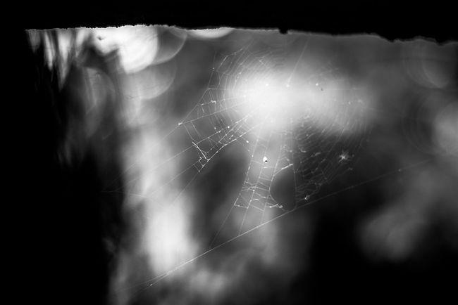 паутина чернобелое черно-белое паук Природа природароссии Spider Spider Web First Eyeem Photo