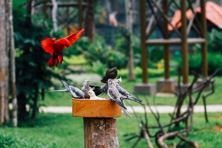 bird park tweet