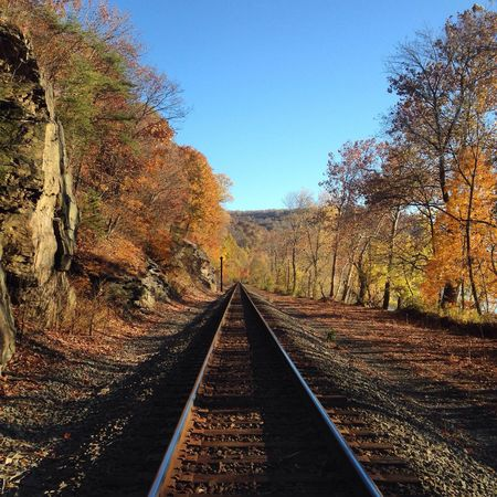 Tree Nature Clear Sky No People Day Railroad Track Rail Transportation Outdoors Transportation Scenics The Way Forward Beauty In Nature Sky