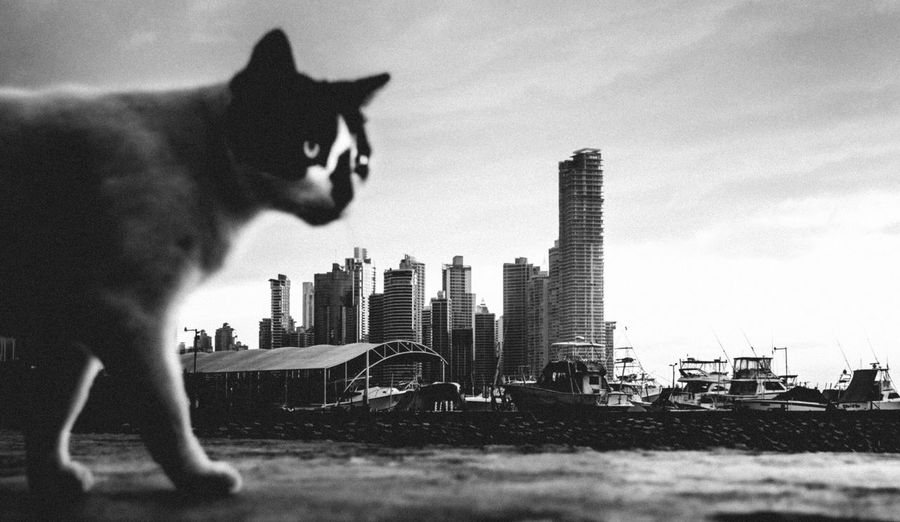 The Street Photographer - 2017 EyeEm Awards EyeEmNewHere