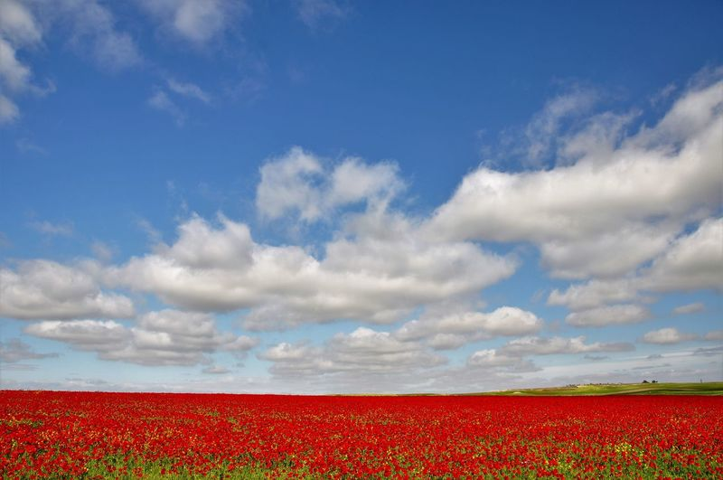 Scenic View Of Flowerbed Against Cloudy Sky