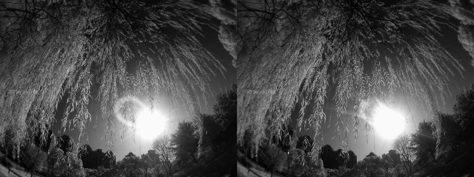 3D Stereovision Stereo Stereoscopic Photography Stereoscopic 3D Stereographic 3D Glasses  Autumn Leaves 3D Shanghai, China Autumu Sunshine Sun Tree Vr Stereo Stereoscopic 3D Art 3D Photo Infrared Photography Infrared Photo Nature Illuminated Night