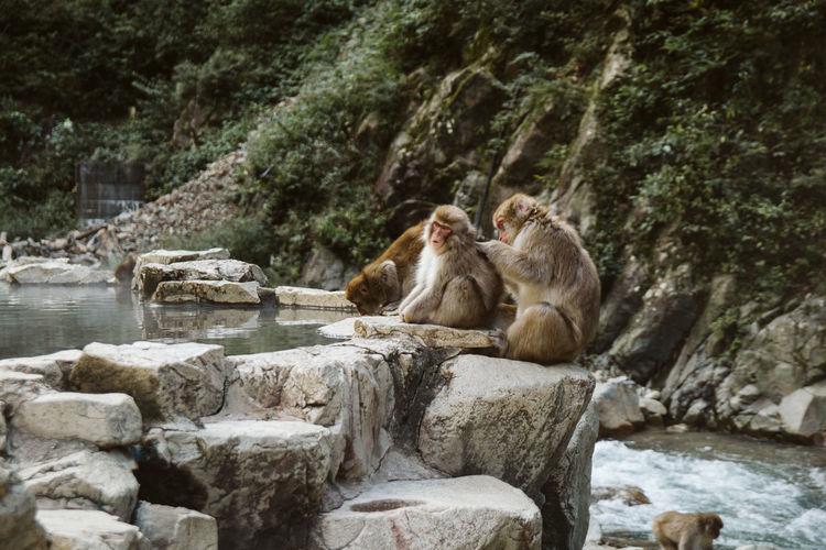 Monkeys Sitting On Rock In Forest