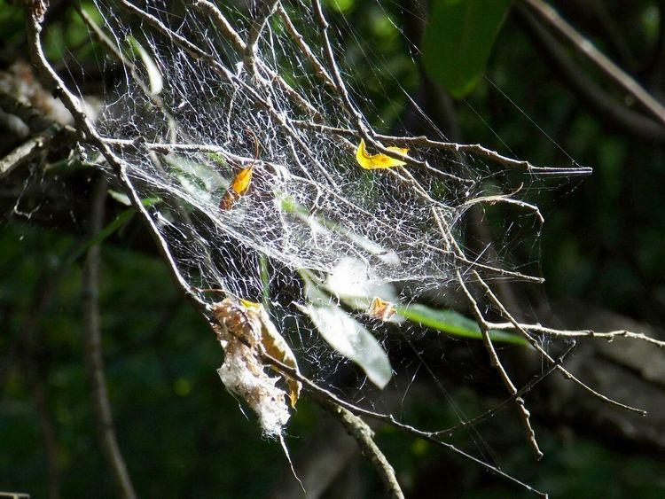 Природа так необычна паутина паук паутинка листья First Eyeem Photo