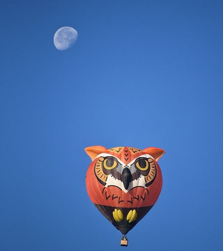hot air balloon regatta Moon Hot Air Balloon Day Clear Sky Sky Astronomy Owl Flying High