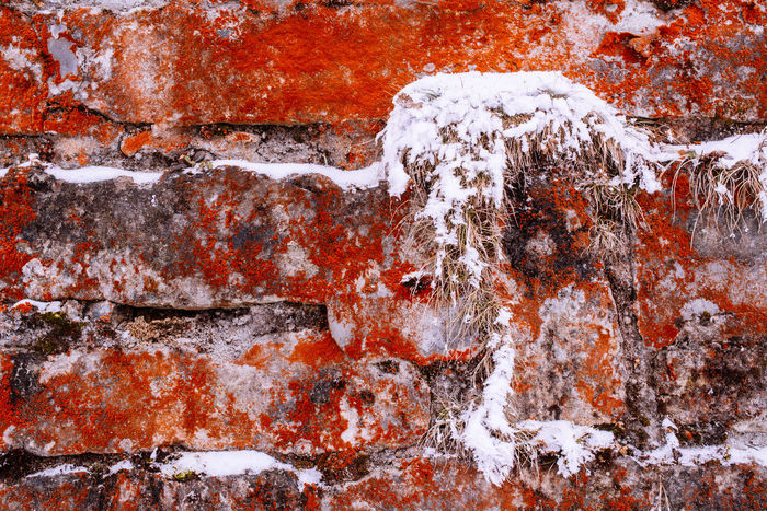 Snow on wall covered with red moss Close-up Nature Wall Beauty In Nature Moss & Lichen Moss Red Red Moss Bricks Brick Wall Grass Dry Grass Snow Winter Wintertime Seasonal Cold Weather