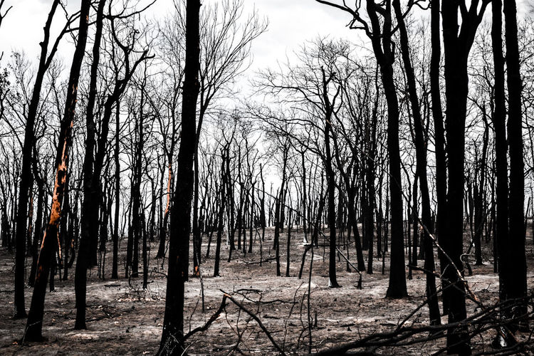 Photo by Cooper Billington in Luther, Oklahoma #photography Beauty In Nature Destruction Forest Fire Landscape First Eyeem Photo