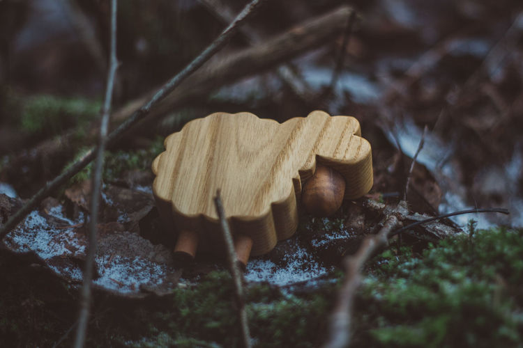 Lamb Toy Toys Wood Wood - Material Forest Nature Wooden Toys Autumn Summer Winter Mushroom Fungus Plant Food Growth Selective Focus Land Toadstool Field Vegetable Tree Close-up No People Beauty In Nature Day Fragility Leaf Outdoors