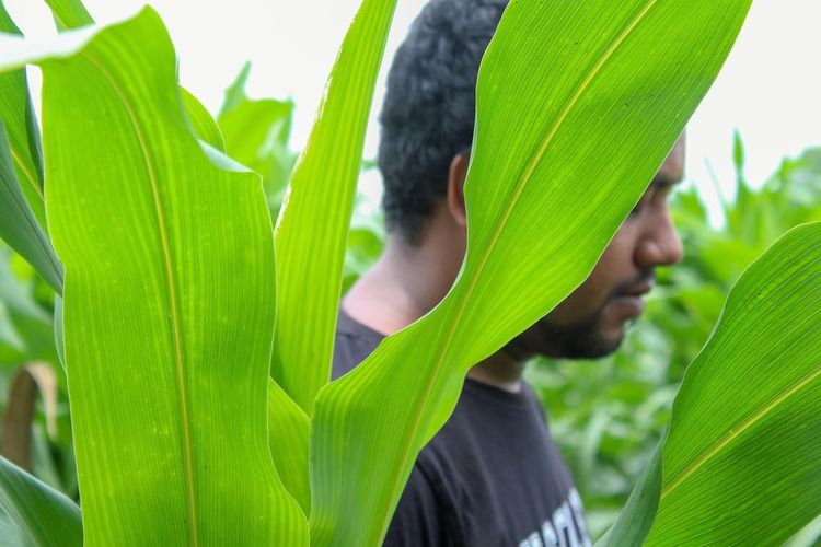 listening to nature Human Body Part Plant Plant Part Plant Life Enjoying Nature Nature Nature_collection Nature Photography Naturelovers Naturephotography Nature Colors Capture The Moment Captured Moment Captured Byme Leaf Banana Tree Close-up Green Color Plant Analogue Sound