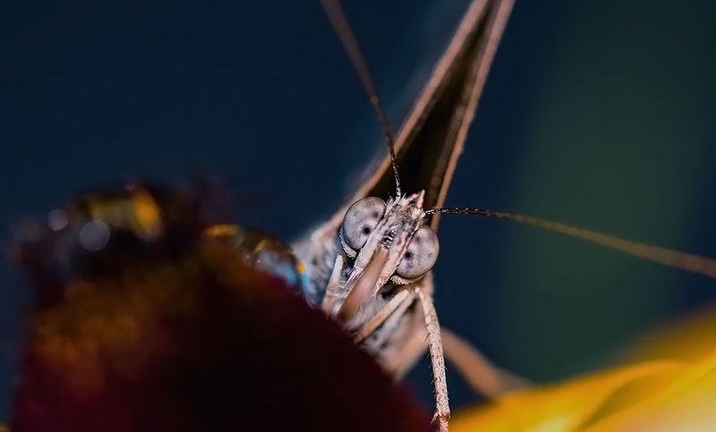 EyeEm Nature Lover Macro Photography Brighteyes  Butterfly Close-up Insect Nature No People Outdoors