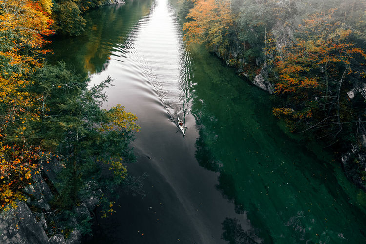High angle view of horse on river amidst trees