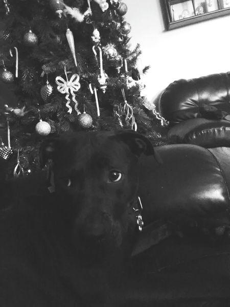 my dog nutella