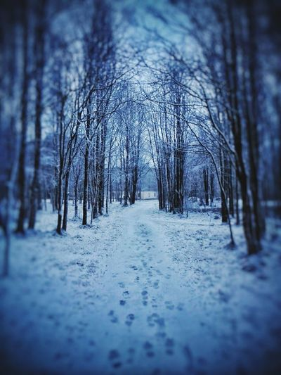Summer2017 Tree Winter Cold Temperature Snow Nature Forest The Way Forward Outdoors Beauty In Nature Landscape Bare Tree No People Day Tree Area